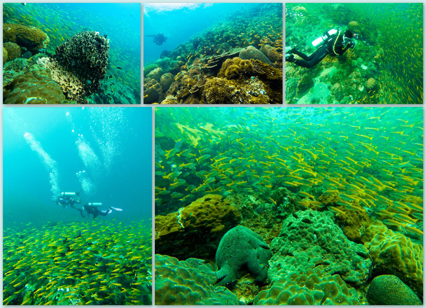 Diving-Rayong